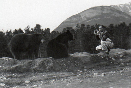 A man kneels to photograph two large black bears.