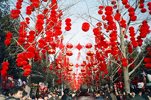 Hundreds of red lanterns are hung from trees above a crowd of people